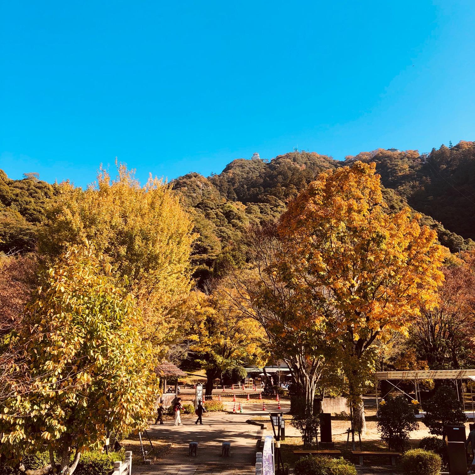 金華山紅葉.jpg